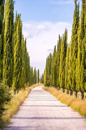 Italian cypress trees alley and a white road to farmhouse in rural landscape. Italian countryside of Tuscany, Italy, Europe. Banco de Imagens