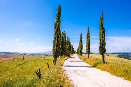 Allée de cyprès italiens et route blanche menant à une ferme dans un paysage rural. Campagne italienne de Toscane, Italie, Europe. Banque d'images