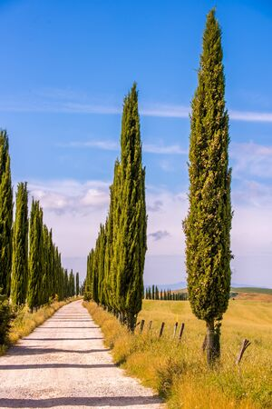 Italian cypress trees alley and a white road to farmhouse in rural landscape. Italian countryside of Tuscany, Italy, Europe. 免版税图像