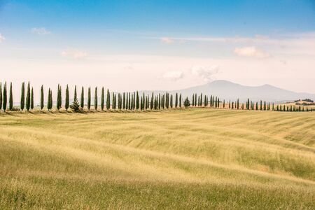 Italian cypress trees alley and a white road to farmhouse in rural landscape. Italian countryside of Tuscany, Italy, Europe. Stok Fotoğraf