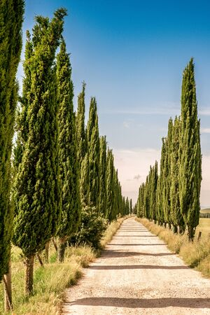 Italian cypress trees alley and a white road to farmhouse in rural landscape. Italian countryside of Tuscany, Italy, Europe. Stockfoto