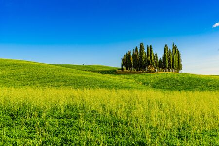 Group of italian cypresses near San Quirico d´Orcia - aerial view - Beautiful landscape Scenery -  Val d'Orcia, Tuscany, Italy