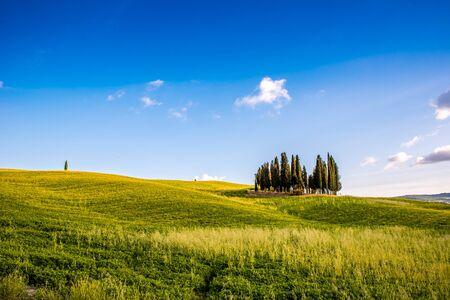 Groep Italiaanse cipressen in de buurt van San Quirico dÂ'Orcia - luchtfoto - prachtig landschap landschap - Val d'Orcia, Toscane, Italië