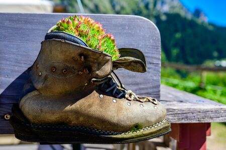 Flower and Plants growing in a leather shoe