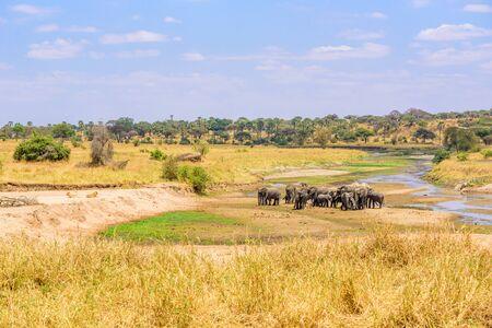 Family of elephants and lions at waterhole in Tarangire national park, Tanzania - Safari in Africa Stok Fotoğraf