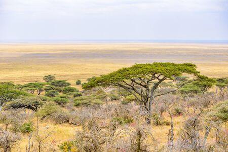 Panorama view to the beautiful bush savannah of Serengeti, Tanzania - Safari in wilderness of Africa