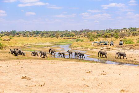 Family of elephants and lions at waterhole in Tarangire national park, Tanzania - Safari in Africa Standard-Bild