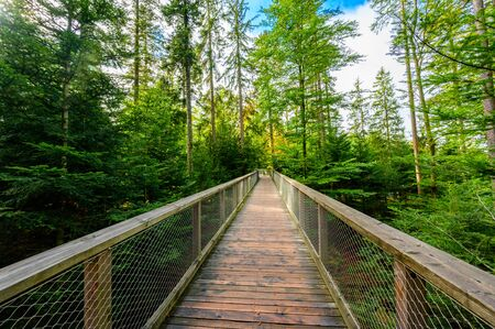 Treetop walk in Black Forest with 40m high Lookout tower located at Sommerberg, Bad Wildbad - Travel destination in Germany