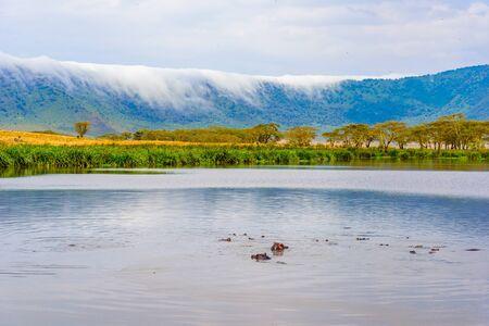 Hippo Pool dans le parc national du cratère du Ngorongoro. Safari Tours dans la savane d'Afrique. Belle faune en Tanzanie, Afrique