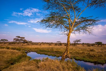 River and Lake in beautiful landscape scenery of Serengeti National Park, Tanzania - Safari in Africa
