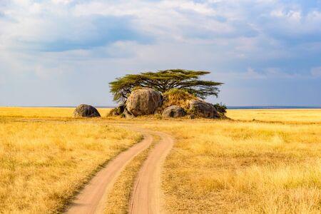 Game drive su strada sterrata con auto Safari nel Parco Nazionale del Serengeti in uno splendido scenario paesaggistico, Tanzania, Africa