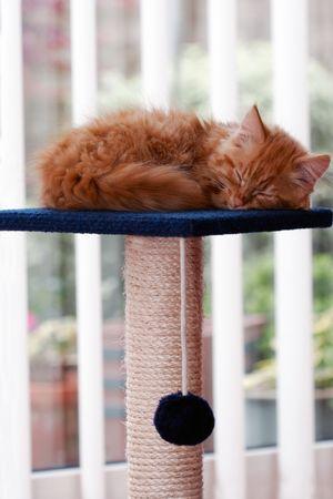 Cute Kitten Sleeping photo