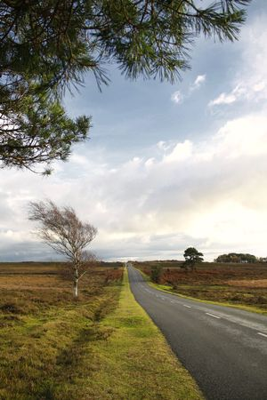 Scenic English Landscape of The New Forest National Park, Hampshire Stock Photo
