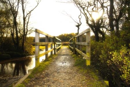 Scenico inglese Landscape of The New Forest National Park, Hampshire Archivio Fotografico
