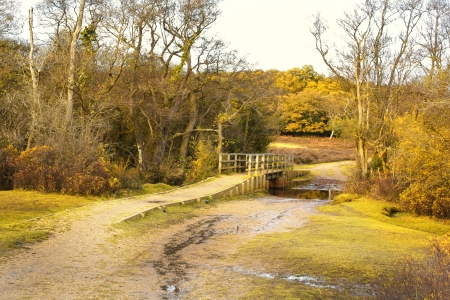 Scenic English Landscape of The New Forest National Park, Hampshire photo
