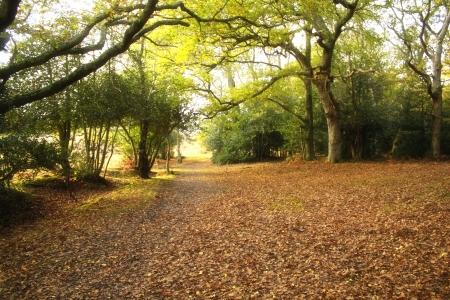 hampshire: Pintoresco paisaje ingl�s de la New Forest National Park, Hampshire