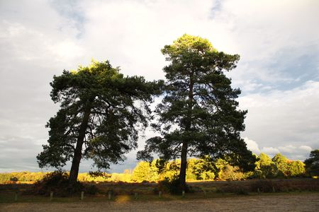quite time: Scenic English Landscape of The New Forest National Park, Hampshire Stock Photo