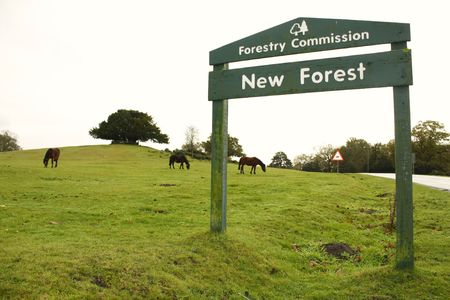 Sign to The New Forest National Park, Hampshire