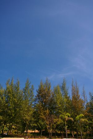 quite time: Treeline with a Clear, Blue Sky at Surin Beach, Thailand