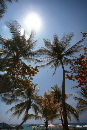 quite time: Looking Upwards at the Sun Shining Through the Trees, Layan Beach, Thailand Stock Photo