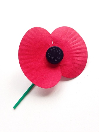 remembrance day poppy: Red Remembrance Day Poppy Stock Photo