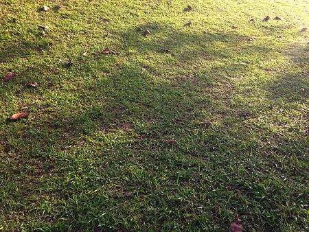 Shadows on Grass Background Texture