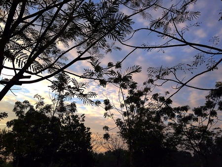 Morning Sky Through Silhouette Trees
