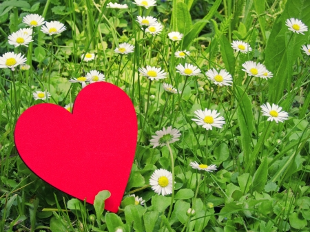 red heart in daisy meadow