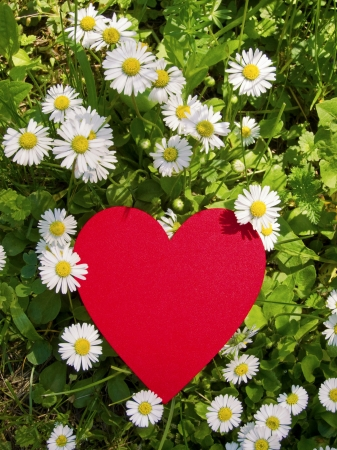 Red heart in daisy meadow photo