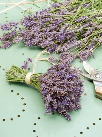 lavandula angustifolia: lavender bouquet