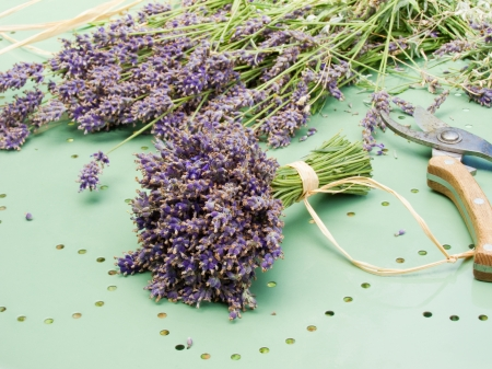 A bouquet of dry lavender