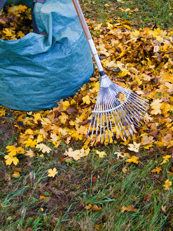 Fall leaves with rake photo