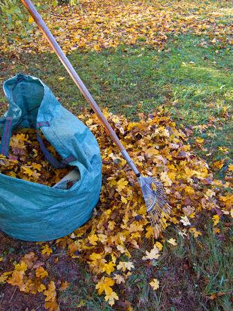 Fall leaves with rake photo