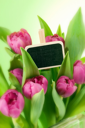beautiful pink tulips bouquet in vase and greeting card Stock Photo
