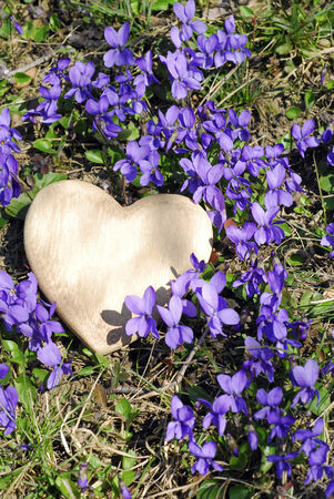 Wooden heart and violets photo