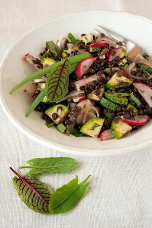vernal: Vernal lentil salad Stock Photo