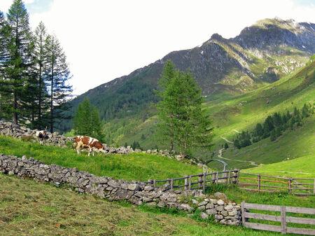 Idyllic alpine meadow in Ahrntal, South Tyrol Stock Photo