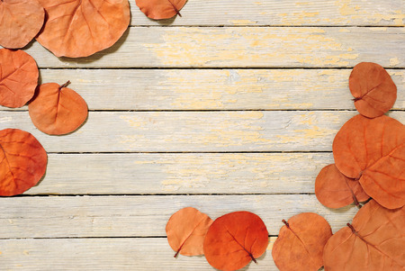 leaf close up: autumn leaves on white wooden table Stock Photo