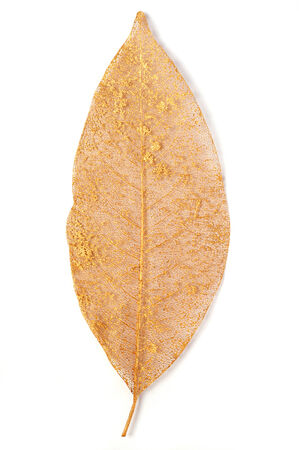 sprayed: gilded leaf over white background Stock Photo