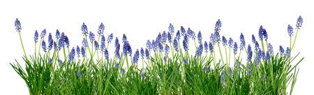spring easter garden border with bluebells isolated over white