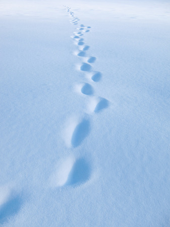 track in the snow, winter trail