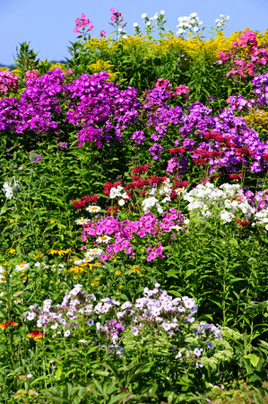 bee balm: colorful perennial border with phlox Stock Photo