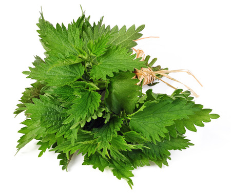 urtica: Common nettle (Urtica) isolated over white background Stock Photo