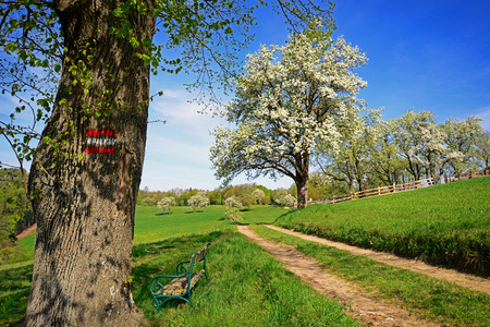 hiking path: Hiking path in spring Vienna Woods Austria