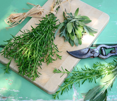 and savory: preparing bunches of savory and sage for drying