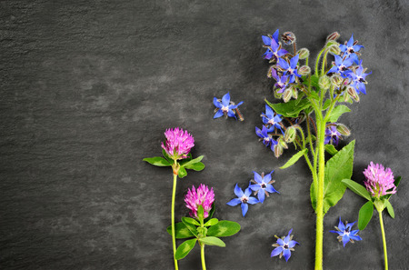 red clover: borage and red clover over over dark slate board background Stock Photo
