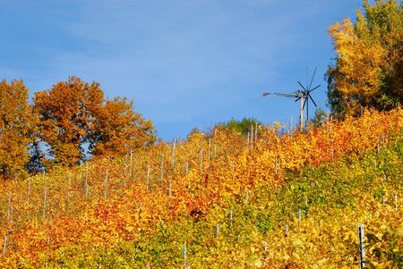 vineyards and klapotetz (traditionell scarecrow), South Styria, Styria, Austria