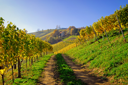 autumn colouring: way through vineyards in South Styria, Styria, Austria