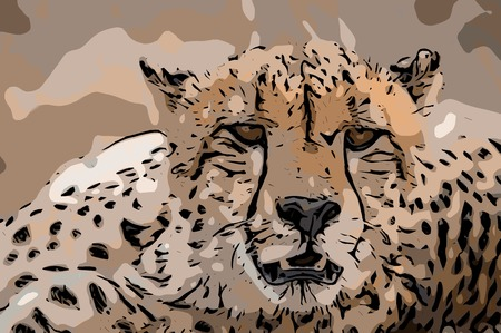 starring: Vector of a starring Cheetah in the Kruger National Park, South Africa.
