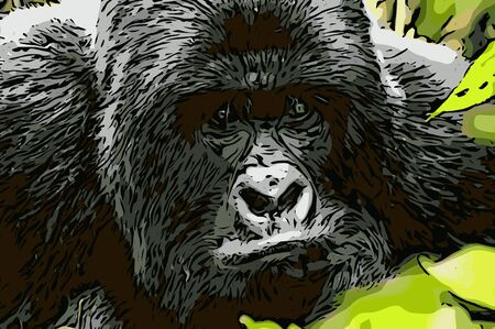democratic: Vector of a starring Silverback Mountain gorilla in the Virunga National Park, Democratic Republic Of Congo. Stock Photo